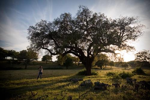 "105 |reposting this wonderful oak ... ( ""This tree is mine!"" ) by Teresa Teixeira"