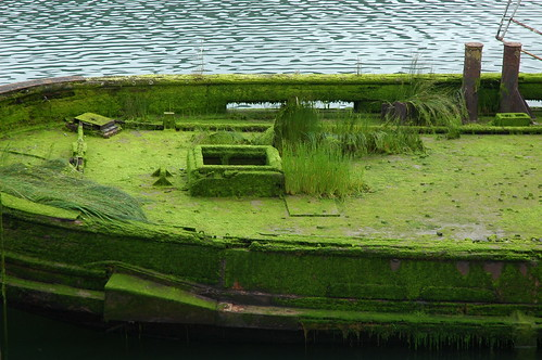 Overgrown ship deck, green grass, moss, The Mary D. Hume, built in 1881, Gold River, Oregon, USA by Wonderlane