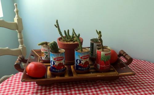 Western spaghetti  cactus