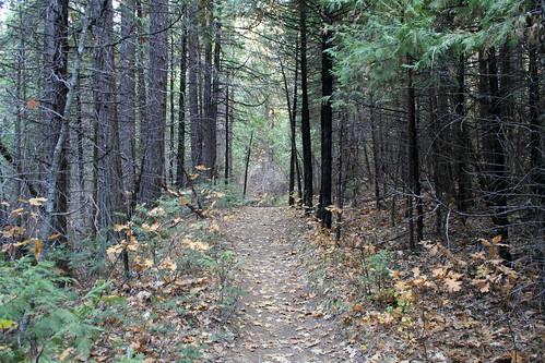 california travel autumn trees nature hiking sierra nationalforest