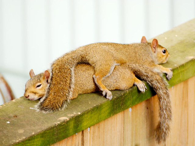The Two Squirrel Pancake