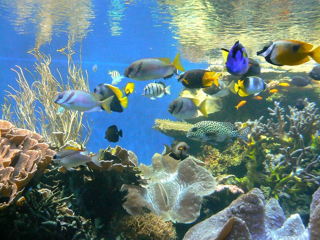 Image Result For Waikiki Aquarium