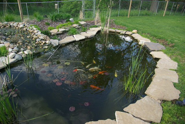 My Aunt Lori 39 S Pond Flickr Photo Sharing