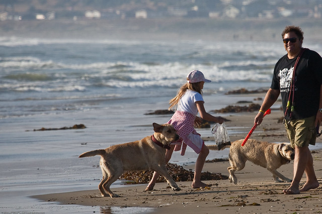 Father and daughter play with their two Labrador dogs on Morro Strand State Beach, 03 June 2009
