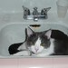 Elvis in the Sink