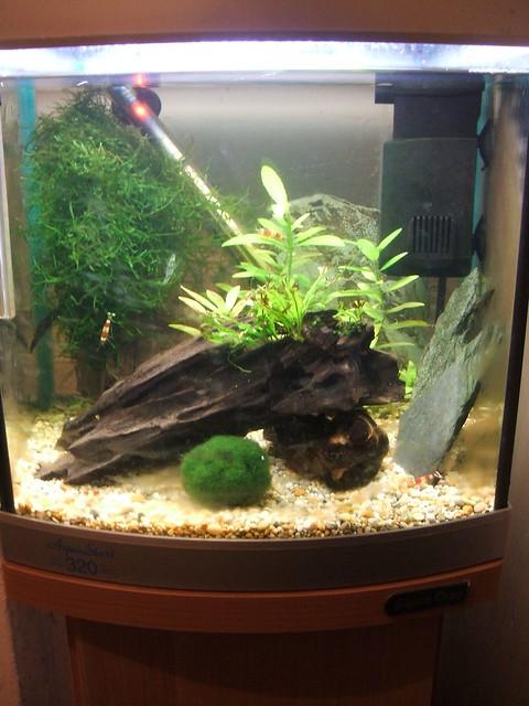 Shrimp Tank 03/09