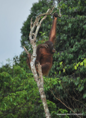 """Sumatra dal libro """"Giorno per giorno, l'avventura"""" di Walter Bonatti"""