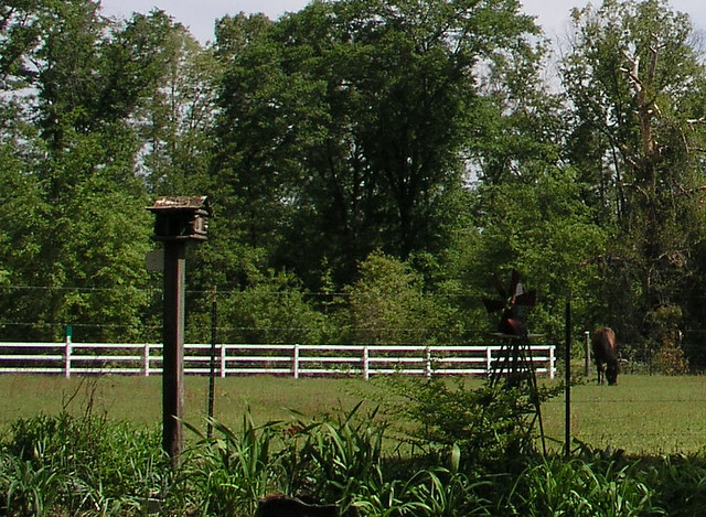 Fence over flower bed flickr photo sharing for Flower bed fencing