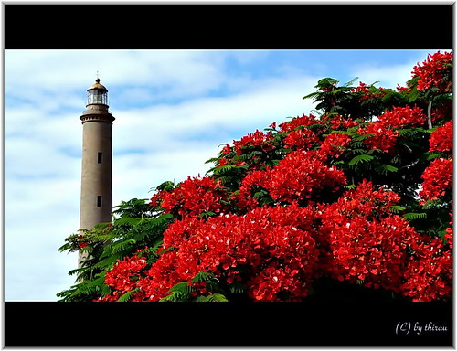 Gran Canaria - Lighthouse Maspalomas