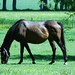 Small photo of Horse