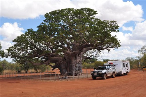 20090625-001-Boab Tree Rest Stop