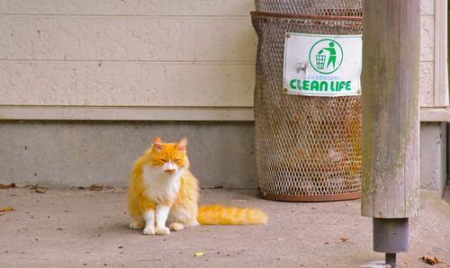 『ゴミ箱と猫』