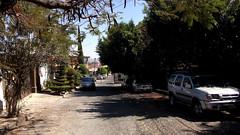 IMG_0293: Acacias