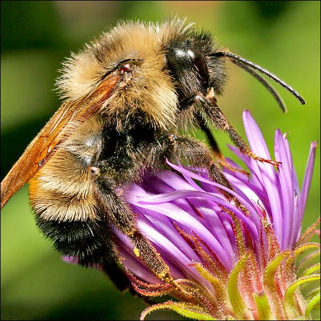 ~ Bee Vibrant ~