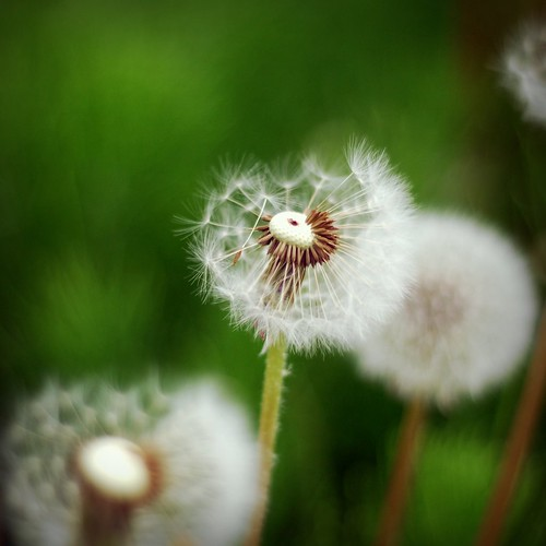 dandy love.