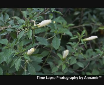 Time Lapse Photography #1