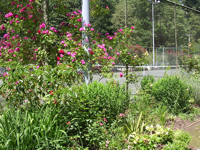 Portland trip - International Rose Test Garden | Flickr ...