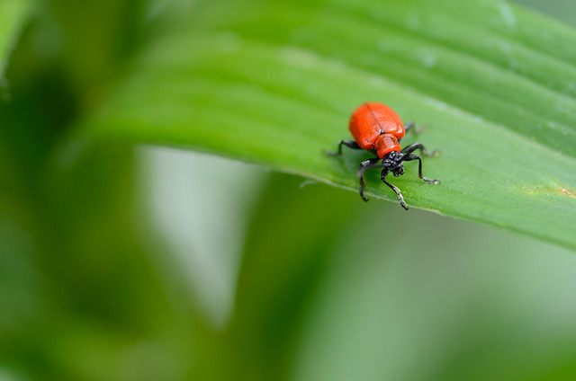 herb garden pests