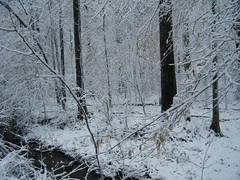 branch, winter, wood, tree, snow, rain and snow mixed, ice, frost, trunk, winter storm, blizzard, freezing,
