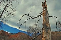 Various Colorado