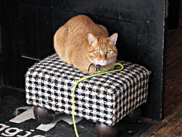 Cat in Kobe