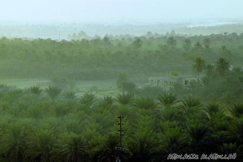 sky green nature sunrise palms oasis saudi arabia ksa alhasa alahsa