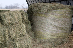 Diffferent kinds of hay