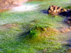 glony i algi w akwarium