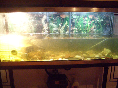 How do i keep my turtle tank water to be clean and non cloudy for My fish tank is cloudy