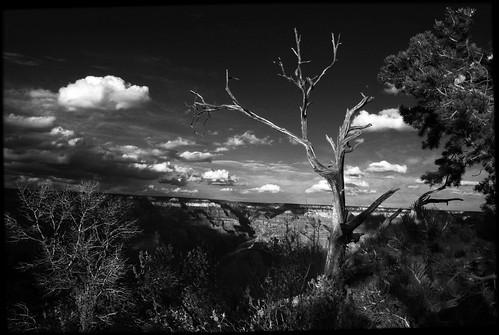 The Grand Canyon by Juli Kearns (Idyllopus)
