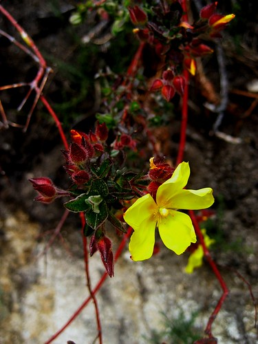 yellow & red