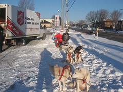 pet(0.0), dog(1.0), winter(1.0), vehicle(1.0), snow(1.0), dog sled(1.0),