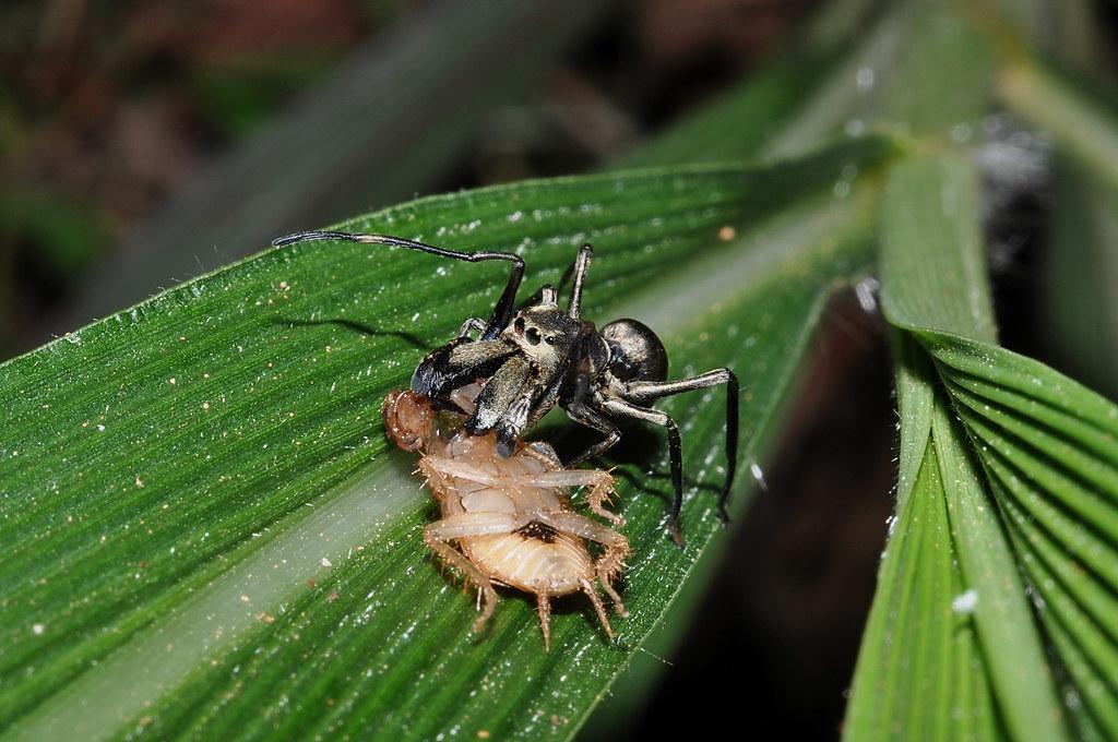 昆虫类简笔画 蚂蚁 蜘蛛侠图片大全大图
