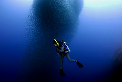 2009 sardine run Pescador