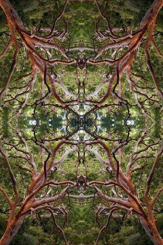 forest mandala 1