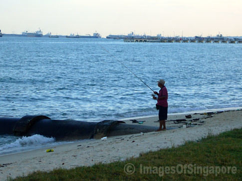 My images of singapore fishing alone at east coast park for East coast fishing