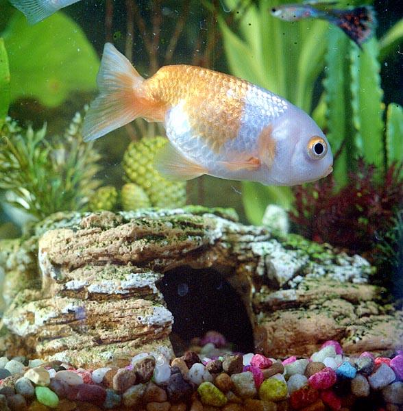 Fishy Pet pics