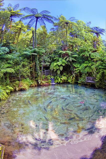 Primordial New Zealand