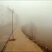 Arbol y arbusto contemplando la niebla / The tree and the shrub looking at the fog by Inmacor