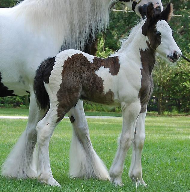 Markiplier recently dating a horse face girl