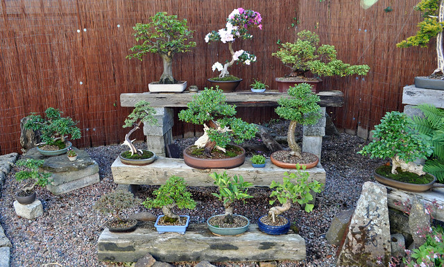 bonsai bench diy