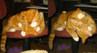 20090211 - cats wrestling - 176-7613-diptych-176-7614 - Oranjello, Lemonjello - wrestling