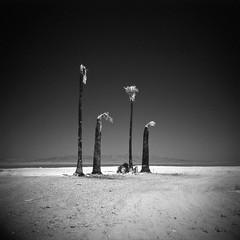 Best of the Salton Sea
