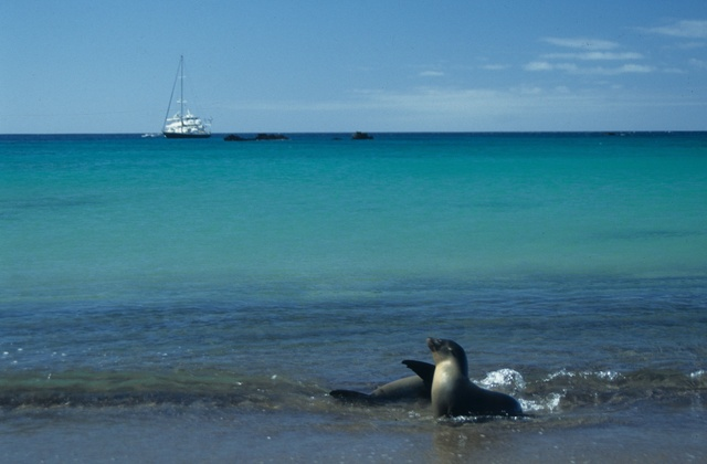 Galapagos Islands - sea lions with a view