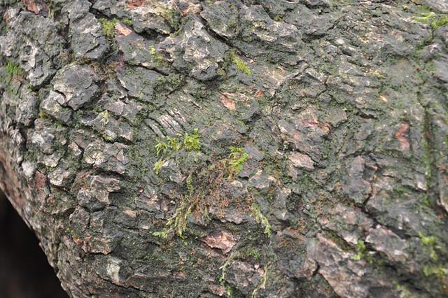 Tree Trunk Texture | Flickr - Photo Sharing!: www.flickr.com/photos/magnera/3401974997