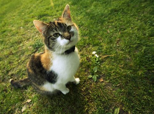 Zagaramateb, Kat van de wereld