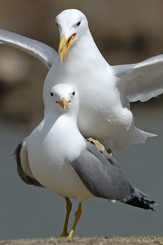 cuz you gotta have gulls