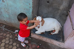 Marziya and the Goat by firoze shakir photographerno1