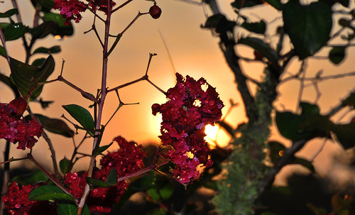 pink summer sky orange green june yellow sunrise louisiana purple horizon batonrouge 2009 crepemyrtle