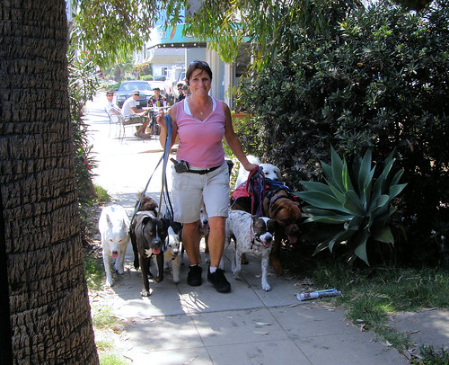 Dog Walker in Ocean Beach (coming)